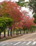 Japanträdgård i höst, Nara Arkivfoto