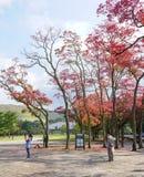 Japanträdgård i höst, Nara Arkivfoton