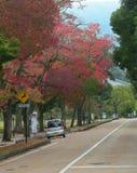 Japanträdgård i höst, Nara Royaltyfria Foton