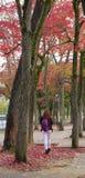 Japanträdgård i höst, Nara Royaltyfri Fotografi