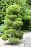 Japanträdgård i sommar, exotiska växter, Wroclaw, Polen Fotografering för Bildbyråer