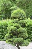 Japanträdgård i sommar, exotiska växter, Wroclaw, Polen Arkivfoto
