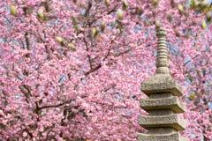 Japanträdgård med det blommande körsbärsröda trädet royaltyfria foton