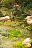 Japanträdgård med vattendammet royaltyfria bilder