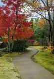 Japanträdgård under höstsäsong Fotografering för Bildbyråer