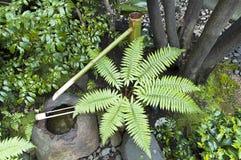 Japanträdgård med gröna ormbunkar Arkivfoton
