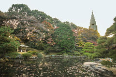 Japończyk jesieni parkowy ulistnienie fotografia royalty free
