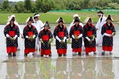 Japońscy młodej dziewczyny flancowania ryż Obraz Stock