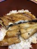 Japońscy węgorzowi ryż zdjęcia stock