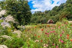 Japońska łąka Zdjęcie Royalty Free