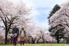 Japońska czereśniowych okwitnięć rama obraz royalty free