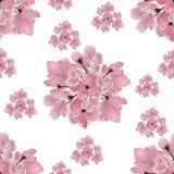 Japońska Wiśnia Set bukiety różowy czereśniowy okwitnięcie Na białym tle bezszwowy ilustracja ilustracja wektor