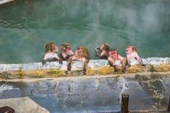 Japoński śnieg małpy makak w gorącej wiosny Sen, Hakodate, Japonia Fotografia Stock