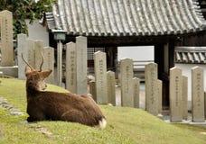 Japoński źrebię i świątynia obraz stock