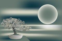 japoński bonsai klon Zdjęcie Royalty Free