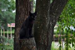 Japoński czarnego kota cyzelatorstwo coś Pic wziąć w Sierpień obraz royalty free