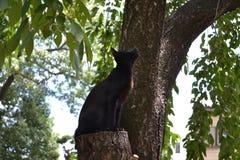 Japoński czarnego kota cyzelatorstwo coś Pic wziąć w Sierpień fotografia stock