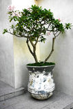 Czereśniowego okwitnięcia drzewo Zdjęcie Stock