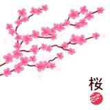 Japoński Czereśniowy okwitnięcie ilustracja wektor