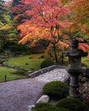 Japoński czerwony klonowy drzewo podczas spadku w Japońskim ogródzie fotografia royalty free