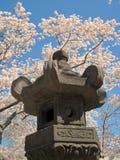 Japoński lampion 024 i Czereśniowi okwitnięcia Zdjęcie Stock
