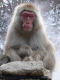 japoński makaka się odprężyć Obrazy Royalty Free
