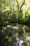 Japoński orientalny zieleń ogródu widok i staw Zdjęcie Royalty Free