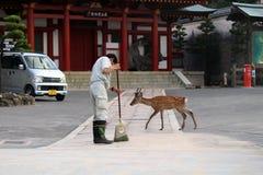 Japoński personel prawdopodobnie janitor? czyścić podłoga wewnątrz dla zdjęcie royalty free