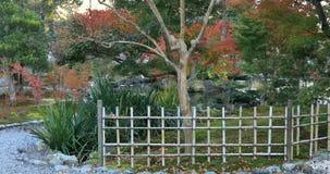 Japoński tradycyjny ogród przy parkiem w jesieni w Shizuoka Japonia zbiory wideo