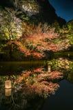 Japońskiego klonu światła przedstawienie przy Mifuneyama Rakuen zdjęcie stock