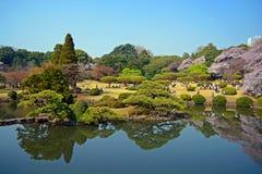 Japończyk parkowy -2 Zdjęcia Royalty Free