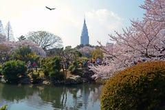 Japończyk parkowy -3 Obraz Royalty Free