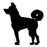 Japończyk psi Akita Zdjęcia Stock
