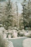japoński ogród podczerwieni Zdjęcia Royalty Free