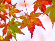 Japonés Autumn Nagoya, viaje de Japón imagenes de archivo