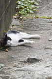 Japonés Cat Sleeping In Alley At Onomichi Japón fotos de archivo libres de regalías