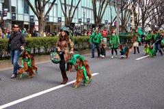 Japonés con allí los setteres irlandeses para las celebraciones 2015 del día de St Patrick Fotos de archivo