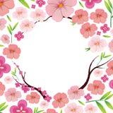 Japonês cor-de-rosa asiático Sakura Template ilustração do vetor