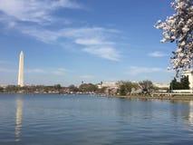 Japonais Cherry Blossom dans le Washington DC avec la vue sur le bassin de marée Images stock