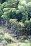Japonia bambusa gaj Obrazy Stock