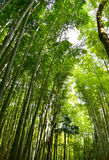Japonia bambusa las Obraz Stock