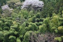 Japonia bambusa las Fotografia Stock