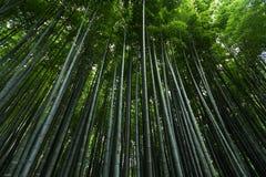 Japonia bambusa las Obrazy Stock