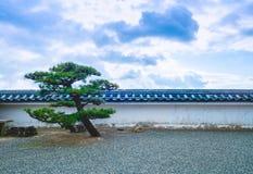 Japonia czarna sosna Zdjęcie Stock