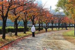 Japonia jesień w Osaka fotografia royalty free