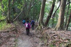 Japonia lasowy ślad Fotografia Royalty Free