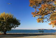 Japonia Morze. Jesień. 15 Zdjęcie Royalty Free