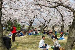 Japonia ` s czereśniowego okwitnięcia sezon Zdjęcia Royalty Free