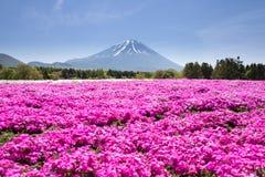 Japonia Shibazakura festiwal z polem różowy mech Sakura lub czereśniowy okwitnięcie z Halnym Fuji Yamanashi, Japonia Obraz Royalty Free