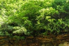 Jarów drewna Obrazy Royalty Free